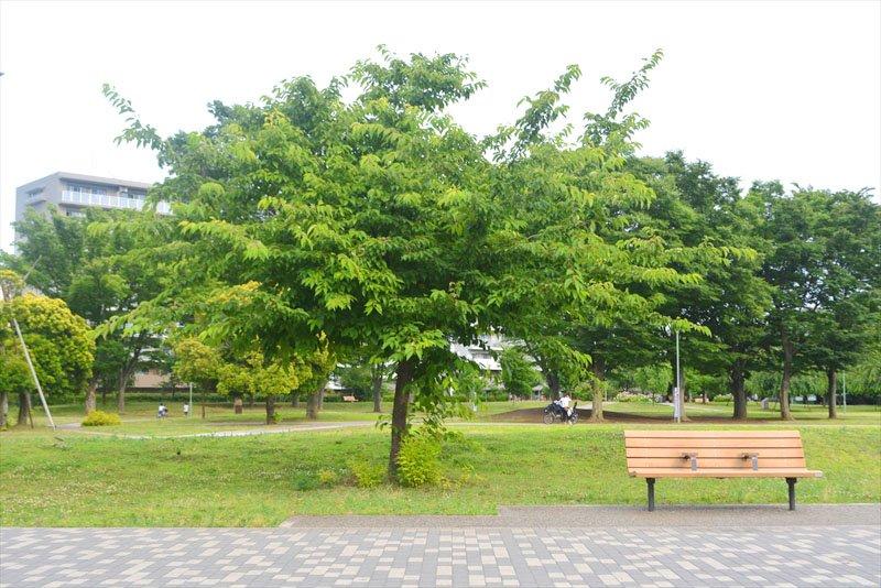 「福岡中央公園」