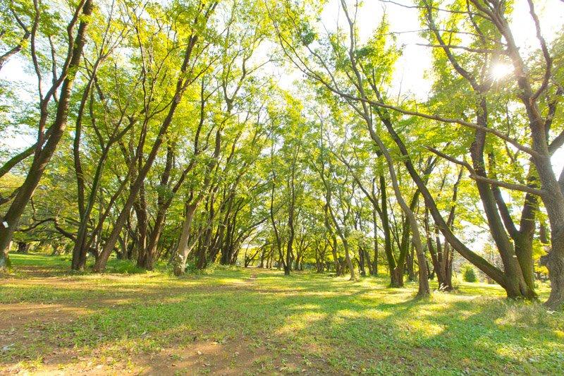 緑豊かな「所沢航空記念公園」